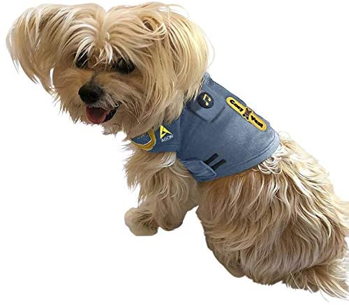 maltese puppy wearing a Thunder Vest for Dogs