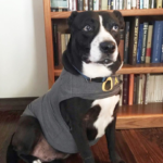 Dog Anxiety Vest - Dog and books