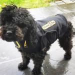 Dog Anxiety Vest - Small dark dog