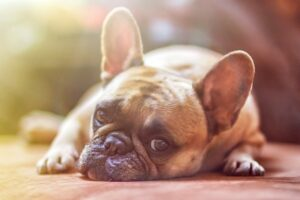 Read more about the article The Complete Guide to Treat Anxiety in Dogs