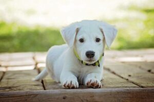 Read more about the article Nervousness in Dogs: The Best Proven Ways to Calm a Nervous Dog