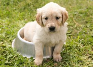 Read more about the article Puppy Barking – What Might Be the Reasons Behind the Issue?
