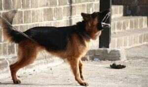 Read more about the article Stop Dog Barking – Find Out How To Treat It Effectively