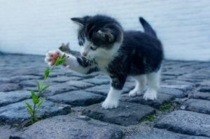 Read more about the article Essential Oils for Cats – Everything You Need to Know About Them