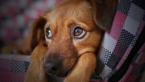 Read more about the article Ibuprofen for Dogs – What Are The Best Alternative Pain Relievers?