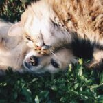 Dog Scared of Cat – The Best Ways to Deal with This Issue