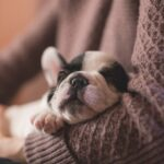 Crate Train Puppy – The Imperative Hacks You Should Know