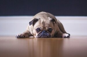Read more about the article Dog Fear – What May Be the Cause and How to Relieve it?