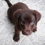 Male Dog Names – How to Choose the Best for Your Pooch