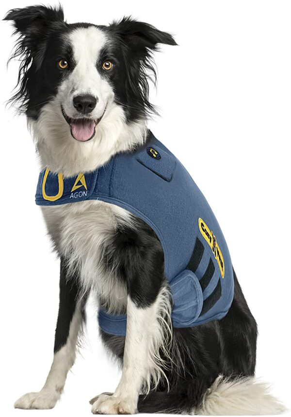 border collie wearing a Thunder Vest for Dogs