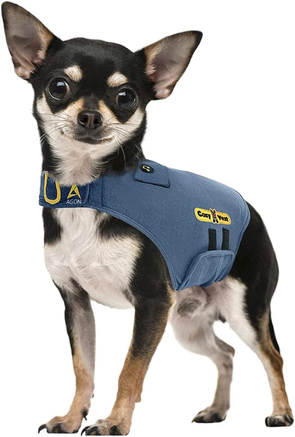 chihuaua puppy wearing a Thunder Vest for Dogs