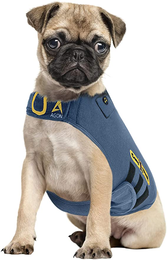 pug wearing a Thunder Vest for Dogs