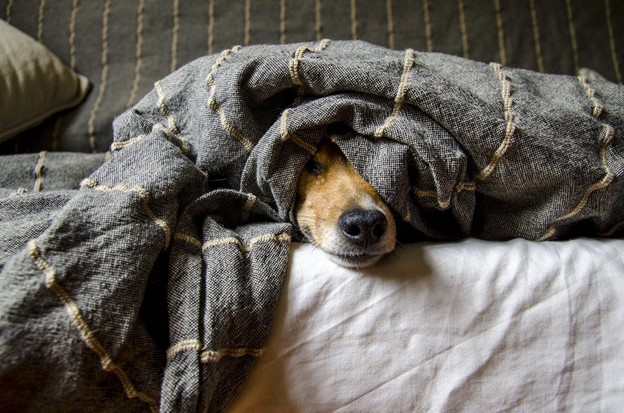 cute dog names - dog covered up in a blanket