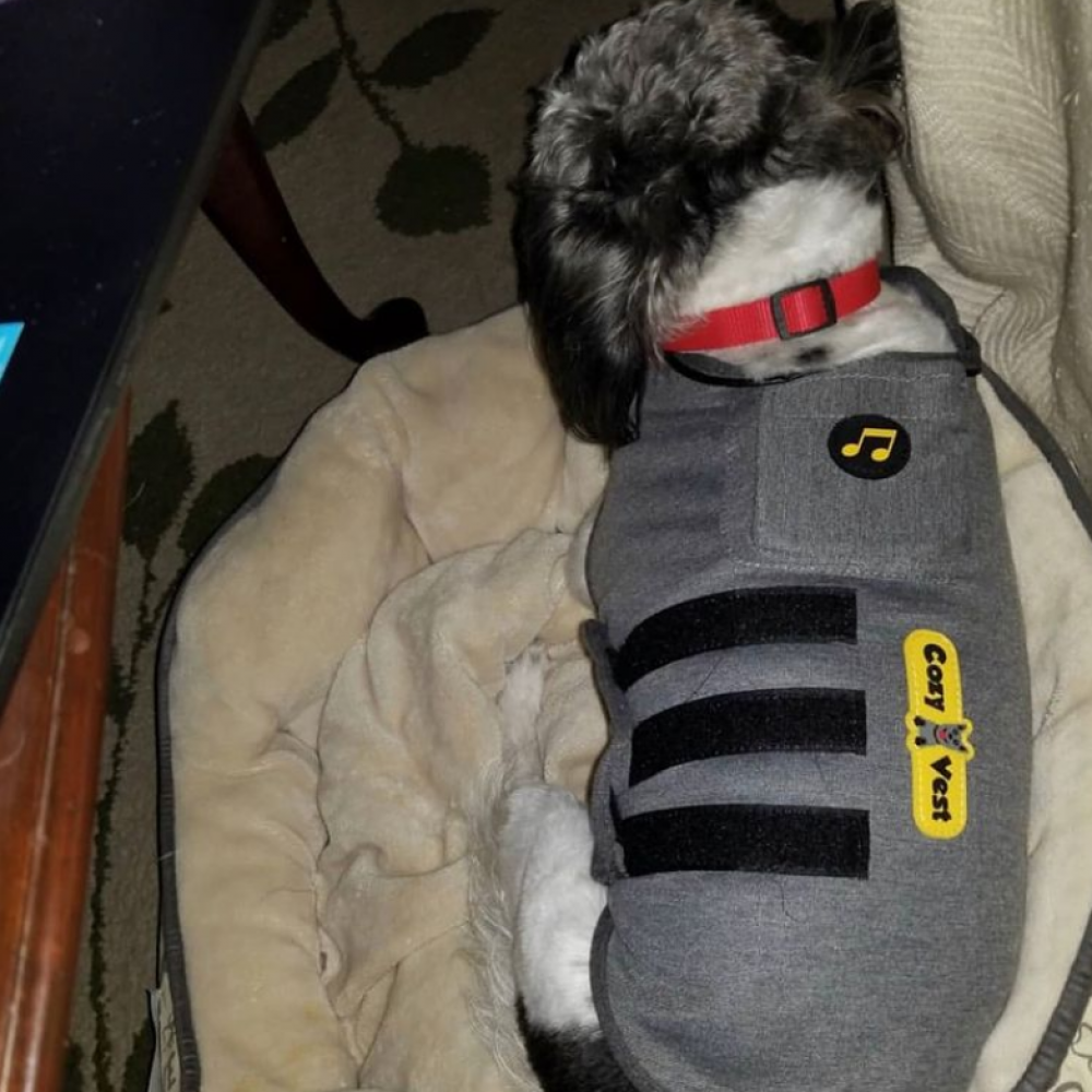 Dog Anxiety Vest - Dog in Bed
