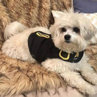 Dog Anxiety Vest - Dog on the Sofa